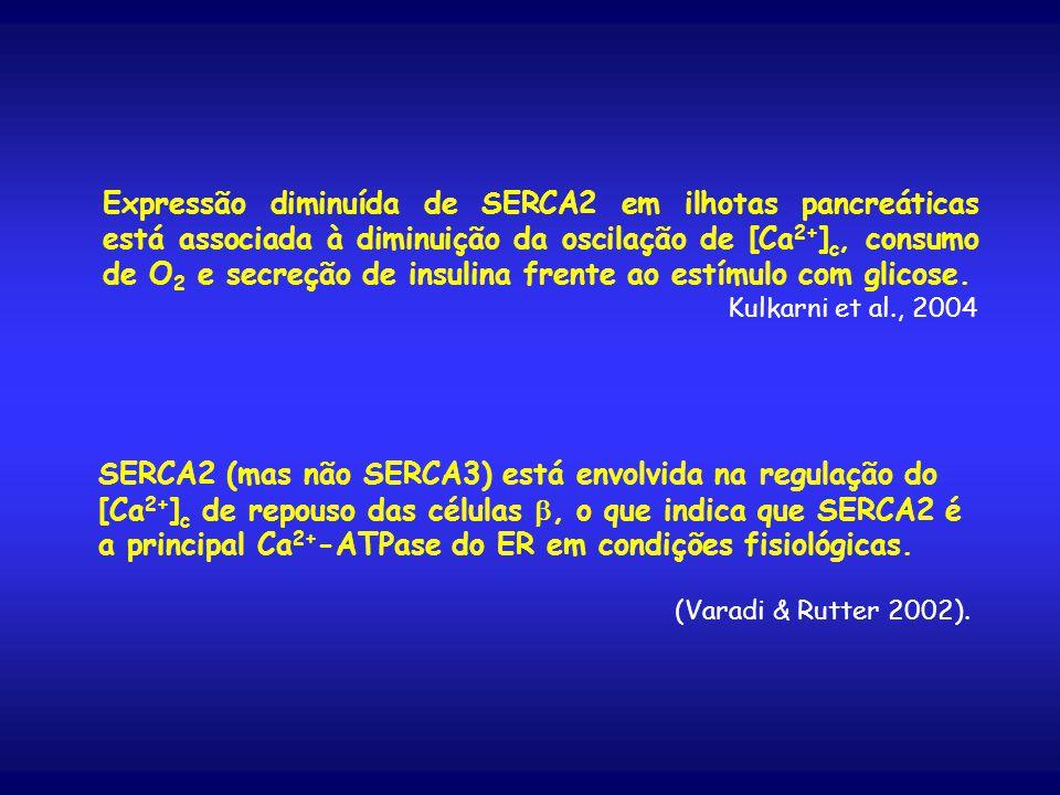 Expressão diminuída de SERCA2 em ilhotas pancreáticas está associada à diminuição da oscilação de [Ca2+]c, consumo de O2 e secreção de insulina frente ao estímulo com glicose.